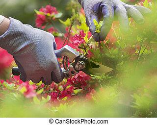 découpage, fleurs
