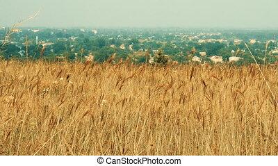 défaillance, herbe, field., temps