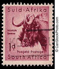 dél-afrika, levélbélyeg, fekete, wildebeest, 1954