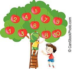 dénombrement, arbre, nombres, pommes