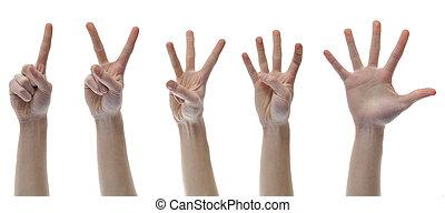 dénombrement, trois, deux, quatre, cinq, doigt, mains, une