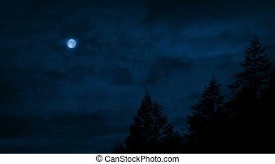 dépassement, ciel, au-dessus, arbres, nuit
