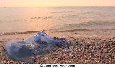 dépassement, homme, mort, méduse, jambes, mer, peu profond, water.