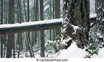 dépassement, neige, arbres, enterré