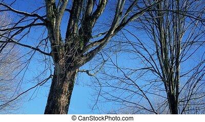 dépassement, nu, arbres hiver