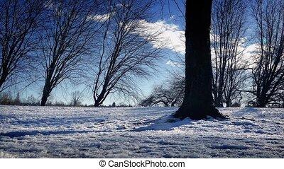 dépassement, nu, neige, arbres