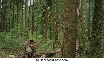 dépassement, retourné, et, cassé, arbres, après, orage