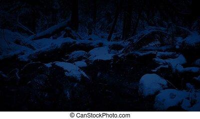dépassement, rivière, forêt, chute neige, nuit