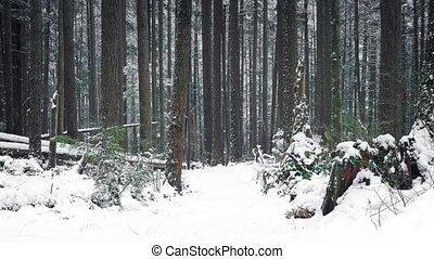 dépassement, sentier, par, bois, dans, les, neige