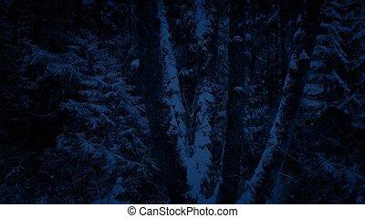 dépassement, tempête neige, arbres, nuit