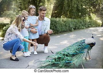 dépenser, jour, famille, zoo