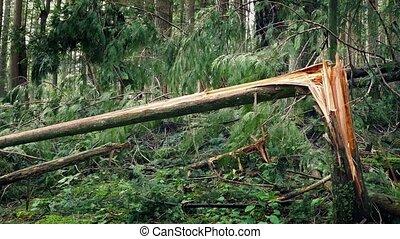 déplacer au-delà, arbre cassé, coffre, après, orage