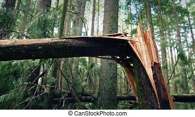 déplacer au-delà, arbre, cassé, dans, moitié, par, orage