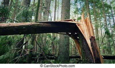déplacer au-delà, arbre, cassé, dans, moitié, par,...