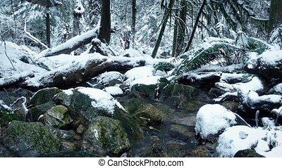 déplacer au-delà, rivière, dans, neigeux, forêt