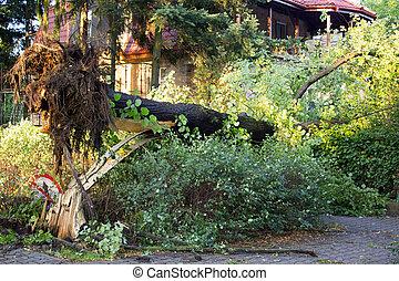 déraciné, après, arbre, orage