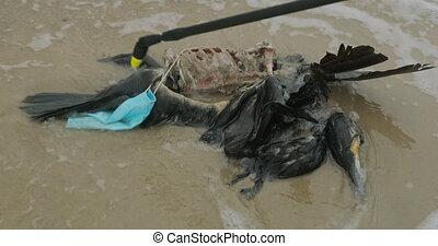 désastre, sea., ambiant, oiseaux, mort