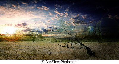désert, arbre
