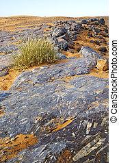 désert, buisson, fossile, vieux