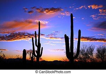 désert, coucher soleil, saguaro