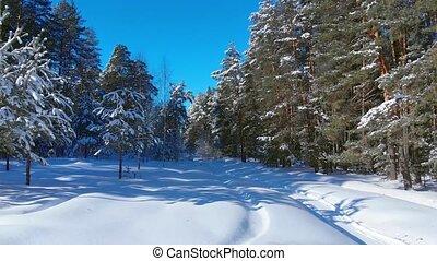 désert, couverture, forêt, neige, couvertures, russe