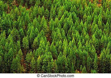 désert, forêt, arbres pin, montagnes