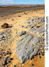 désert, fossile, vieux