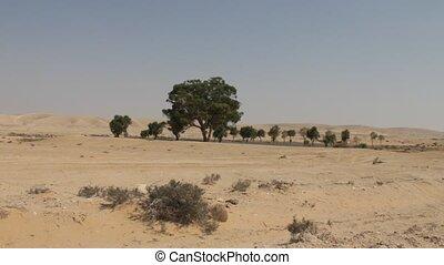 désert negev