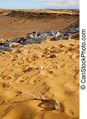 désert, pas, fossile, vieux