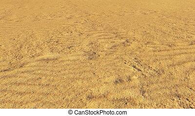 désert, sec, arbre