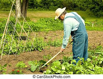 désherber, sien, jardin, homme