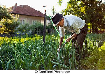 désherber, vieux, jardin, homme