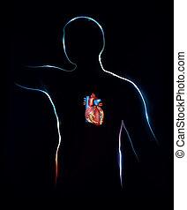 détaillé, anatomie, coeur humain