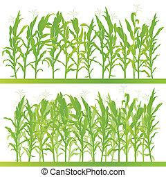 détaillé, campagne, maïs, illustration, champ, vecteur, fond...