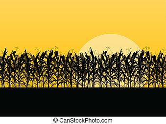 détaillé, campagne, maïs, illustration, champ, vecteur, fond, paysage