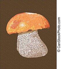 détaillé, champignon, boletus