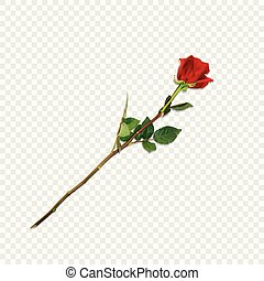détaillé, fleur, rose, longue tige, hautement, rouges