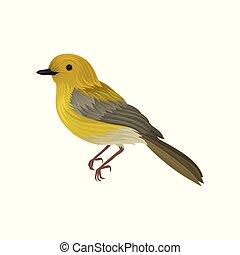 détaillé, vie sauvage, plumage., ornithologie, chanson, thème, oiseau jaune, clair, vecteur, queue, long, petit, ou, warbler., icône