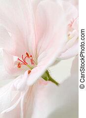 détails, de, a, fleur