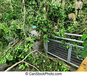 détruire, après, typhon