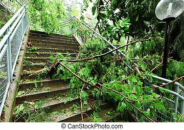 détruit, après, typhon
