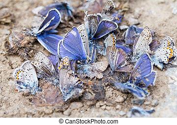 détruit, papillon, famille