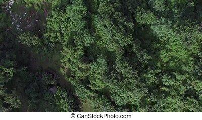 développé, montagne, entiers, aérien, gouvernement, arbres.,...