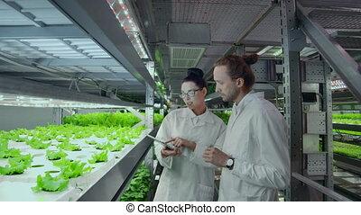 développement, les, vertical, tablette, nourriture, ordinateur portable, moderne, engagé, farms., analyse, sain, automatisé, production, computer., scientifiques, croissant, utilisation, données