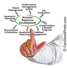 développement, ressource, humain