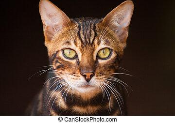 dévisager, chat