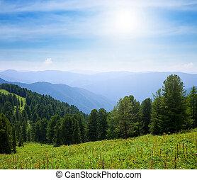 día, bosque, soleado, montañas