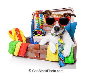 día de fiesta de verano, perro