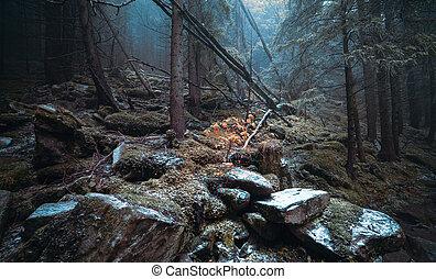 día de otoño, en, el, bosque