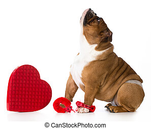 día de valentines, perro
